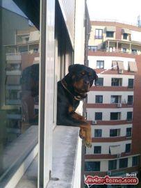 perro-asomado-en-el-balcon